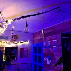 ブルーLED/ジュエリーライト/エジソン電球/流木照明/流木/ハロウィン/... 一枚前の写真の蜘蛛の巣 ここにいます 見…