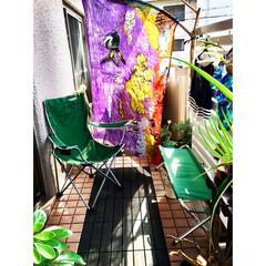 ビキニ/パレオ/流木/台風/目隠し/モニター/... 台風通過後 玄関開けたら桜の大木が根こそ…