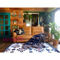 ニトリ2018秋冬コーディネート/ターコイズブルー/関家具/ビーチスタイル/床DIY/流木/... おはよーございます いつもより冷えてる大…