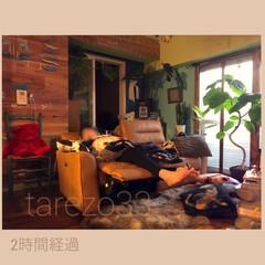 グリーンのある暮らし/流木/板壁DIY/ビーチスタイル/カフェ風/インテリア/... ソファの餌食になった人 「ちょっと昼寝」…
