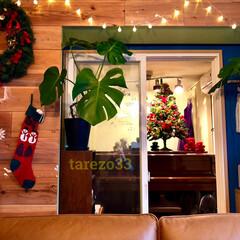 イルミネーション/モンステラ/板壁DIY/DIY/セルフリフォーム/セルフリノベーション/... クリスマスツリー  1つ目は、今年もピア…