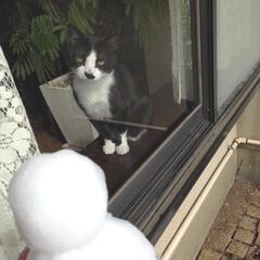 cat/冬支度/秋/ペット/猫/風景/... だんだん寒くなってきましたね。 今年は雪…