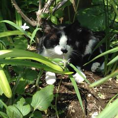 ガーデニング/秋/ペット/猫/風景 うちの庭でのお気に入りポイントみたいです…