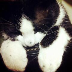 にゃんこ同好会/ペット/猫/風景/住まい 今週もお疲れ様でした。  昔使ってた財布…