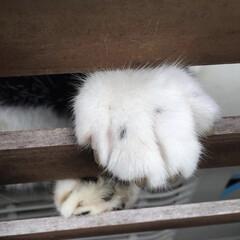 風景/ペット/猫/住まい/にゃんこ同好会 こんばんは☁︎ ねこぱんちです。  子猫…