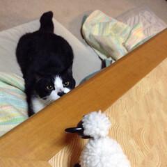 にゃんこ同好会/秋/ペット/猫/風景/住まい おはようございます☀︎ お気に入りの羊の…