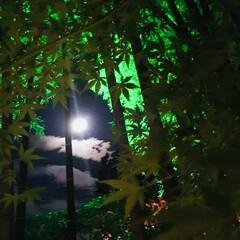 月/ライトアップ/夜/紅葉/秋 かぐや姫に出会えそうな美しい月夜でした。…