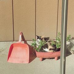 フォロー大歓迎/いいね/ペット/猫 ウチのチビちゃん🐱❤  家の外出たら息子…