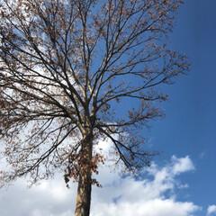 風景 すっかり枯れてる木だけど…なんか今年も頑…