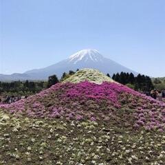 風景/旅 また芝桜祭りの、このひと時を家族で過ごし…