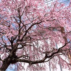春の一枚/風景 今日は、とても快晴です~最高です😃💕ただ…(2枚目)