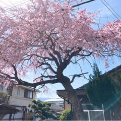 春の一枚/風景 今日は、とても快晴です~最高です😃💕ただ…(4枚目)