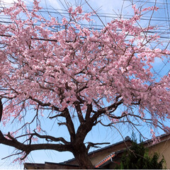 春の一枚/風景 今日は、とても快晴です~最高です😃💕ただ…(3枚目)