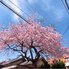 春の一枚/風景 今日は、とても快晴です~最高です😃💕ただ…
