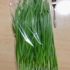 冬ニラ/食材 ラクマアプリで購入❣️ 農家産直の美味し…