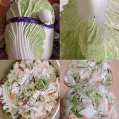 おかず作り/LIMIAごはんクラブ 地元のお野菜、300円とは凄く大きい!!…