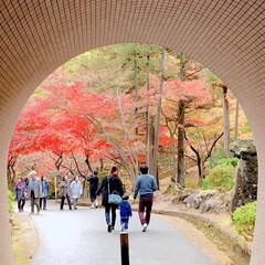 家族/家族写真/紅葉/秋/風景/グルメ/... トンネルから見えた紅葉が綺麗でした🍁  …