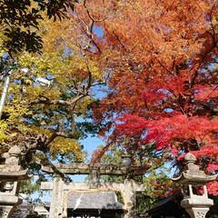 風景 佐賀!嬉野温泉!豊玉姫神社、美肌の神様と…(2枚目)