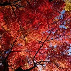 風景 佐賀!嬉野温泉!豊玉姫神社、美肌の神様と…(5枚目)