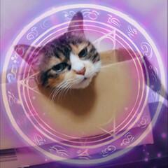 フォロー大歓迎 最近の猫w箱満喫してました