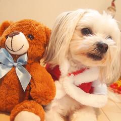 わんこ同好会/フォロー大歓迎/ペット/犬/100均/ダイソー/... 100均のアイテムでプチクリスマス写真😍…
