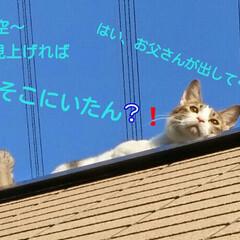 青い空/猫 ゴミを出しに行って、ふと見たらベランダの…