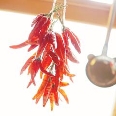 可愛い/実用的/小窓/唐辛子/キッチン/リミアの冬暮らし 唐辛子♡キッチン窓にぶら下げると使いやす…