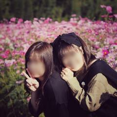 秋だよね/満開/ピンクが可愛い/実家のすぐそばに…/妹と。/コスモス畑 コスモス畑❁❁❁ 田んぼのど真ん中に一面…(4枚目)