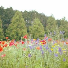 癒やし/ランチタイム/flowergarden/自然/おでかけ 癒やし満たされ大満足♡休息日