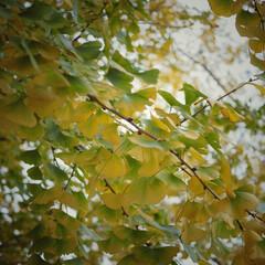 毎年の楽しみ/祖父江銀杏/お出かけ日和/秋だよね/楽しい時間/家族時間/... (2枚目)