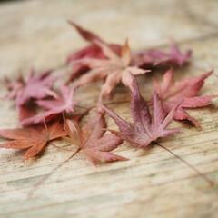 紅葉スポット/お散歩/秋/風景/おでかけ/旅 香嵐渓🍁紅葉狩り