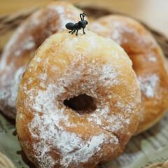 揚げたて最高/美味しい/素朴な味わい/形が可愛い/手作りドーナツ/暮らし 友達からの手作りドーナツ🍩 ドーナツ作り…
