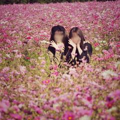 秋だよね/満開/ピンクが可愛い/実家のすぐそばに…/妹と。/コスモス畑 コスモス畑❁❁❁ 田んぼのど真ん中に一面…(5枚目)