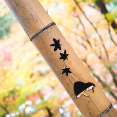 楽しい/食べ歩き/見頃/紅葉狩り/秋/おでかけ 香嵐渓🍁