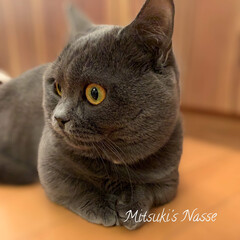 リミアな暮らし/LIMIAな暮らし/LIMIAペット部/リミアペット倶楽部/Mitsuki's nasse/ペット/... お預かりの子猫マンチカンの「レオ」君です…