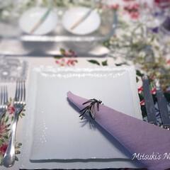 テーブルコーディネート/春/ピンク/Mitsuki's nasse/インテリア/白い皿 春のテーブルコーディネート🌸ピンクのナプ…