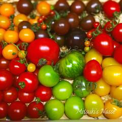 ミニトマト/おうちごはん/コンポート/夏野菜/LIMIAな暮らし/保存食 熊本県産「魔法のトマト」色とりどりのトマ…