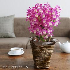 母の日/母の日のお花/お花/ギフト/プレゼント/鉢/... 母の日ギフト 母の日プレゼント 母の日花