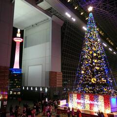 京都タワー/クリスマスツリー/京都駅/京都/風景/旅行/... 京都駅 クリスマスツリー&京都タワー(1枚目)