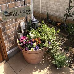 お花のある暮らし/うさぎと暮らす/LIMIAペット同好会 玄関前のお花モリモリしてきました😊 春だ…