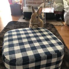 ウサギと暮らす/うさぎ部/うさぎのtiara/LIMIAペット同好会 tiaraおやつちょうだいの巻😊