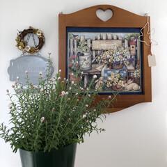 うさぎと暮らす/ハンドメイド好き/うさぎ部/ネザーランドドワーフ/花かんざし/お花のある暮らし/... 花かんざしを買いました😊ドライになるのが…