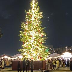 クリスマス/ツリー/赤レンガ倉庫/みなとみらい/GoToトラベル/クリスマスツリー 昨日はみなとみらいで ホテル部屋飲み忘年…