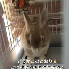 うさぎ部/ウサギと暮らす/LIMIAペット同好会 このポーズをするたびに  お願いされてい…