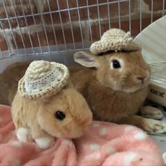 ネザーランドドワーフ/ウサギと暮らす/うさぎ部/LIMIAペット同好会 お友達がtiaraに編み編み帽子作ってく…