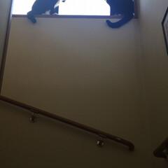 ニャルソック/保護猫/白黒猫/ハチワレ猫/ペット/ペット仲間募集/... 異常にゃし! お勤めご苦労様〜😆(3枚目)