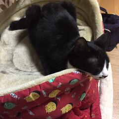 シアワセな寝顔/猫/ねこ/白黒猫/ハチワレ猫/ペット仲間募集/... シアワセそうな寝顔を見てるだけでかぁちゃ…