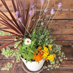 花/寄せ植え/暮らし 久しぶりに寄せ植えをしました😊💕 といっ…