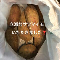 グルメ/フード/スイーツ/おうちごはん/おうちごはんクラブ 立派なサツマイモをいただいたので、スイー…(3枚目)