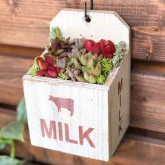 フォロー大歓迎/LIMIAインテリア部/LIMIA手作りし隊/ハンドメイド/DIY/暮らし/... 最近、多肉植物の寄せ植えやリメ缶にハマっ…(3枚目)
